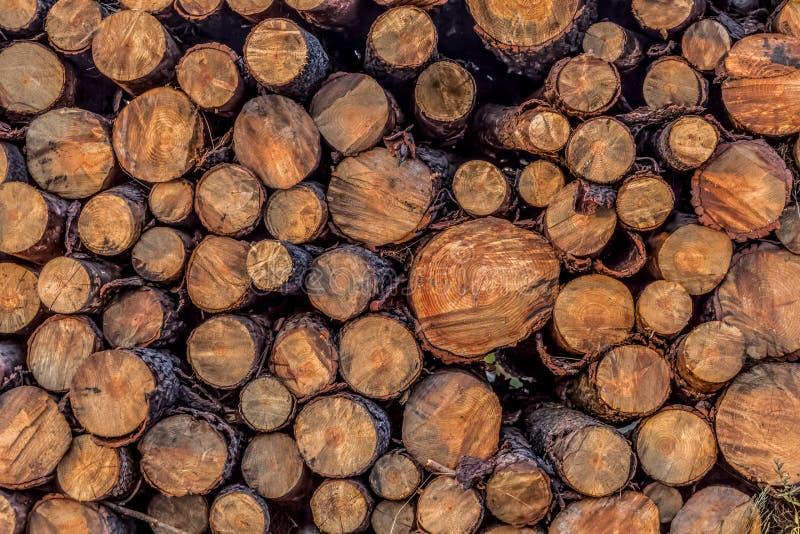 La vue du divers pin ouvre une session scier, pile empilée dans l'extérieur courant, secteur de coupe texturisé photo libre de droits