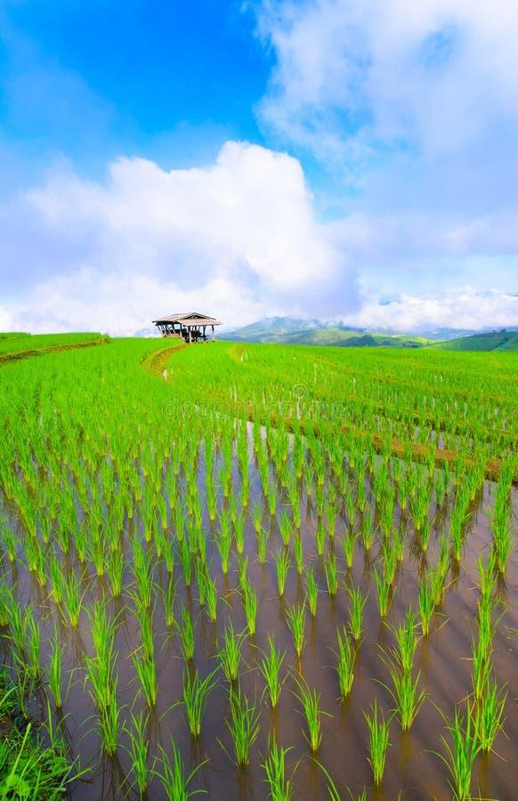 la vue du riz vert met en place la montagne de terrasse avec le cottage dans le compte image stock