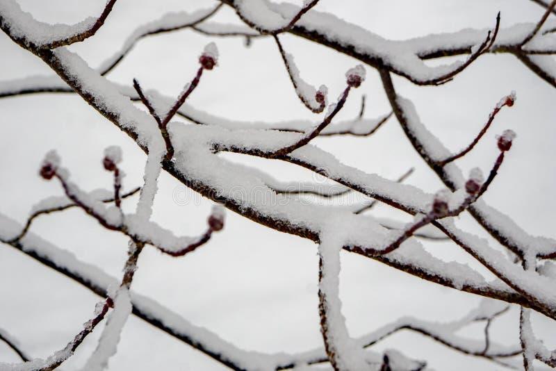 la vue en gros plan de la neige a couvert des branches photo stock