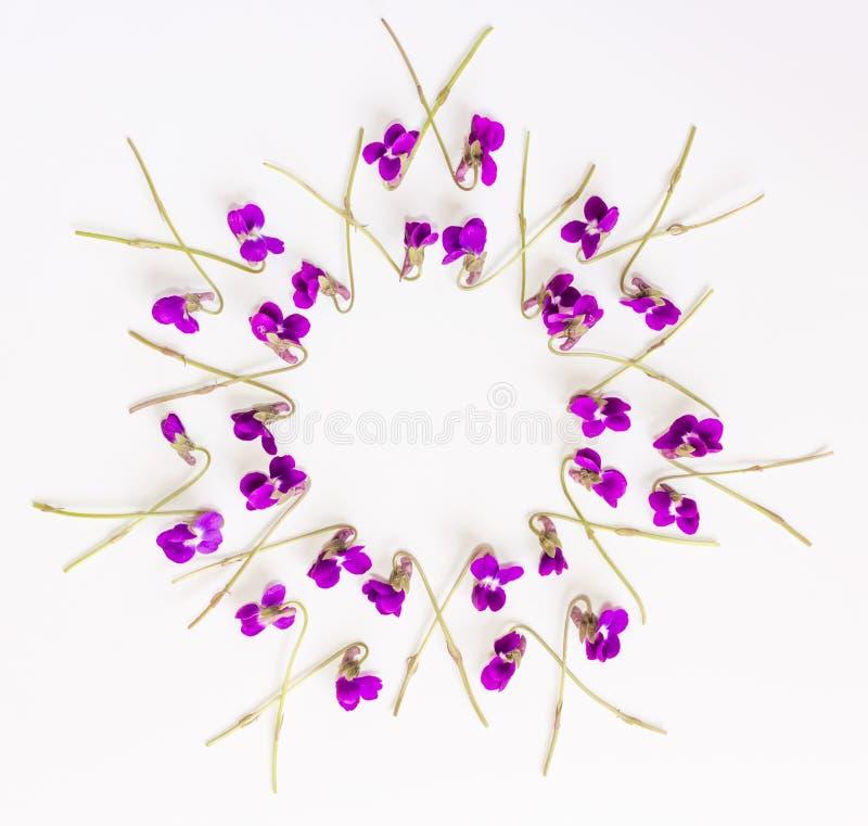 La vue florale de cercle de modèle faite en petite forêt fleurit la violette sur le fond blanc images stock