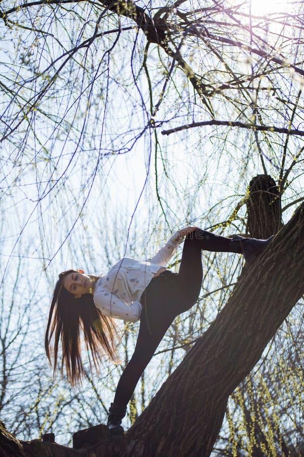 La vue inférieure charmant la gymnaste mince mignonne de fille est sur l'arbre peu commun sans feuilles et exécute des éléments d photographie stock