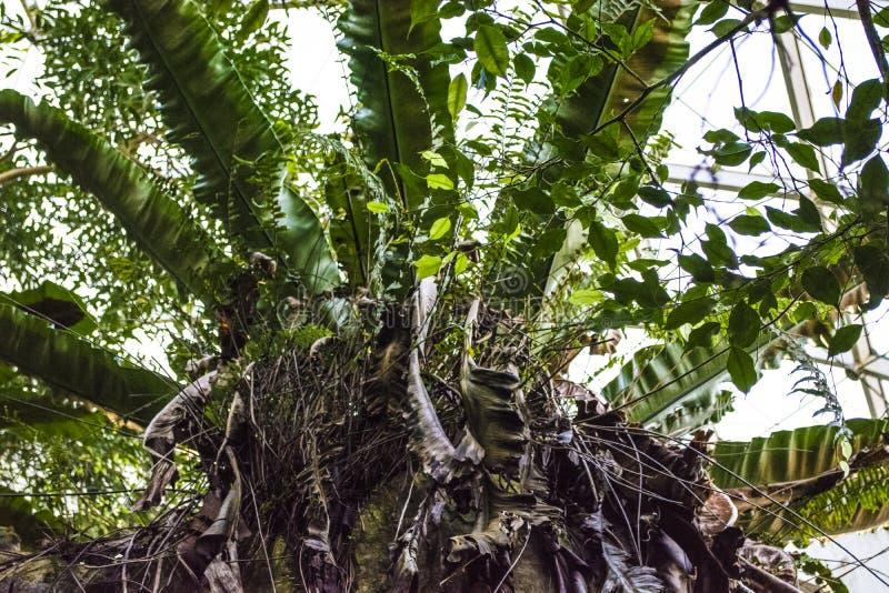 La vue inf?rieure sur les palmiers verts de feuilles Centrale tropicale fond ou texture photo libre de droits