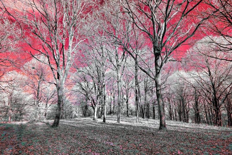 La vue infrarouge du foilage et des arbres tir?s avec le nanom?tre 665 a converti la cam?ra consacr?e photo libre de droits