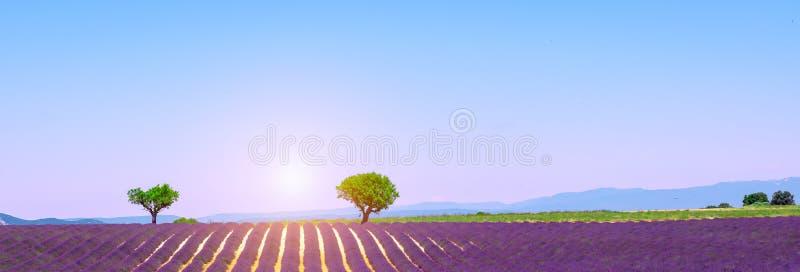 La vue panoramique avec la lavande pourpre met en place, plateau de Valensole, Provence, France photos stock