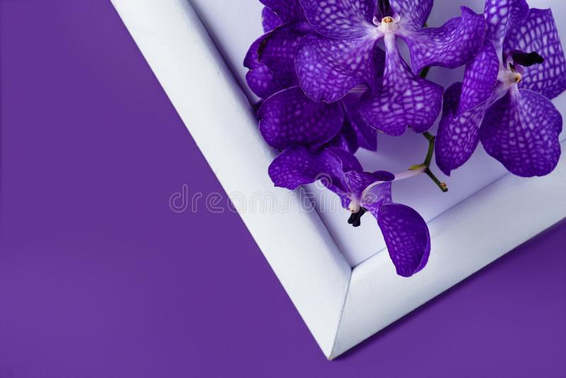 la vue supérieure de l'orchidée fleurit sur le cadre blanc photographie stock libre de droits