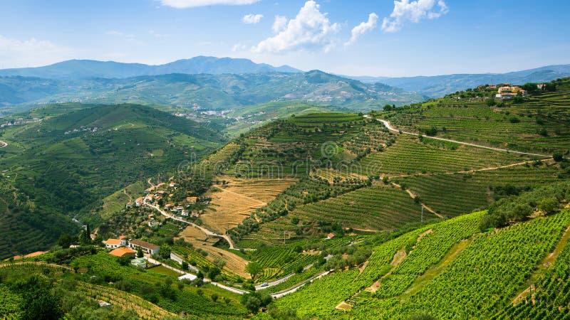 La vue supérieure de la vallée de Douro, les vignobles sont sur des collines, Portugal nature image stock