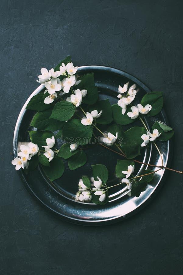 la vue supérieure du jasmin de floraison de beau blanc fleurit sur brillant photographie stock