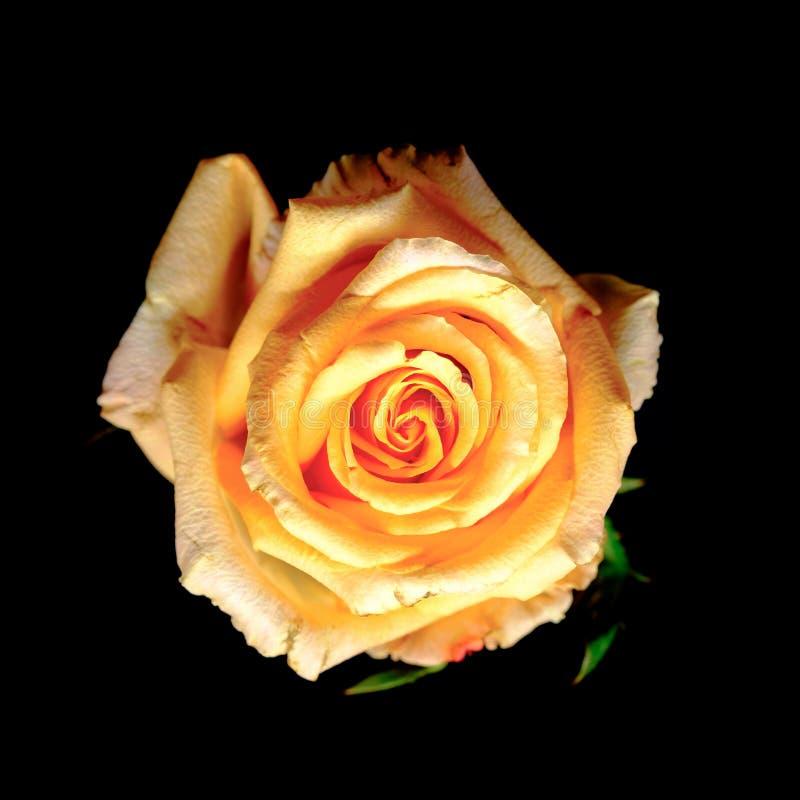 La vue supérieure et se ferment vers le haut de l'image sur la baisse lumineuse de rose et d'eau de jaune images stock