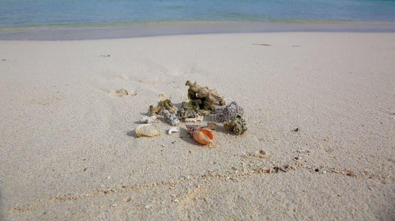 La vue sur le beau groupe de coquilles et les pierres sur le sable blanc échouent L'eau d'océan de turquoise sur le fond photographie stock