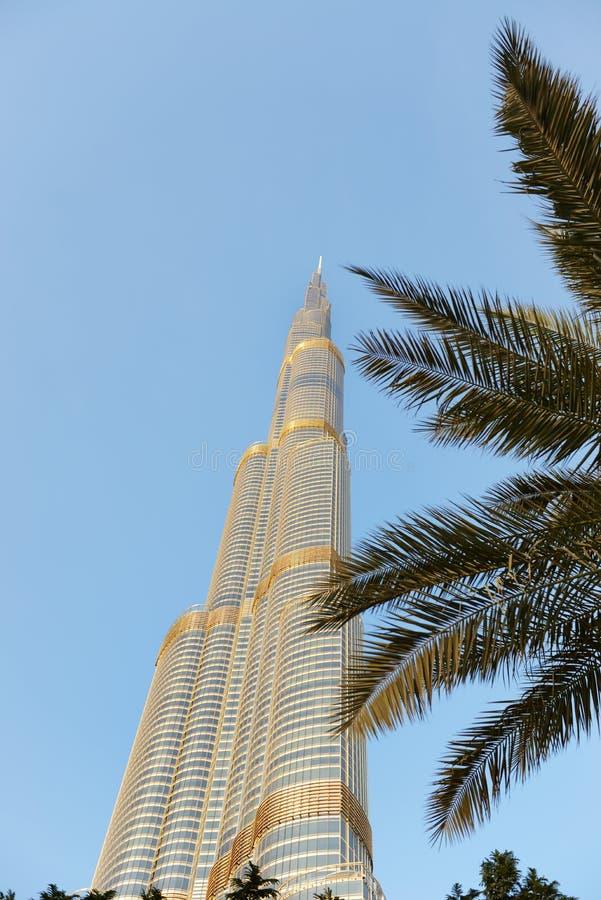 La vue sur le gratte-ciel de Burj Khalifa dans le coucher du soleil et le palmier photos libres de droits