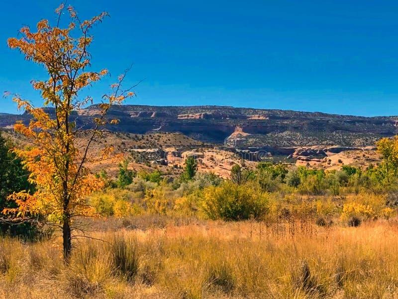 La Wilderest Canyons di Black Ridge in autunno immagine stock libera da diritti