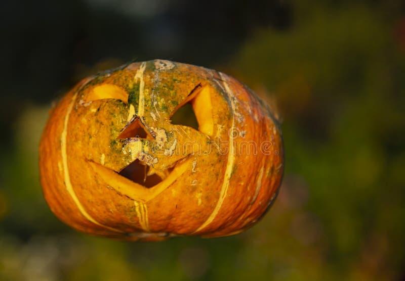 La zucca di Halloween messa in aria senza supporto fotografia stock libera da diritti