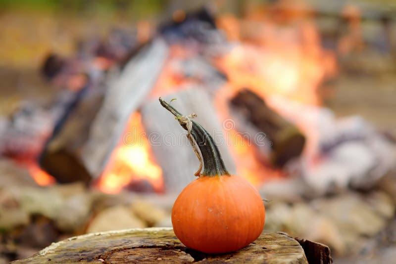 La zucca su fondo del falò sulle celebrazioni di Halloween fa festa in foresta immagine stock libera da diritti