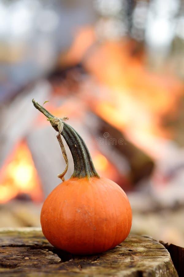 La zucca su fondo del falò sulle celebrazioni di Halloween fa festa in foresta fotografia stock libera da diritti