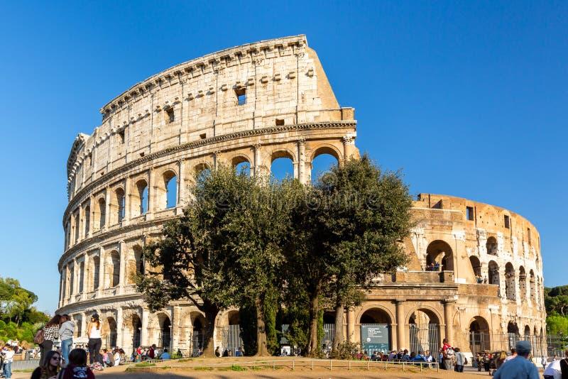 Laag hoek vooraanzicht van mensen en een grote boom voor Colosseum in Rome stock afbeeldingen