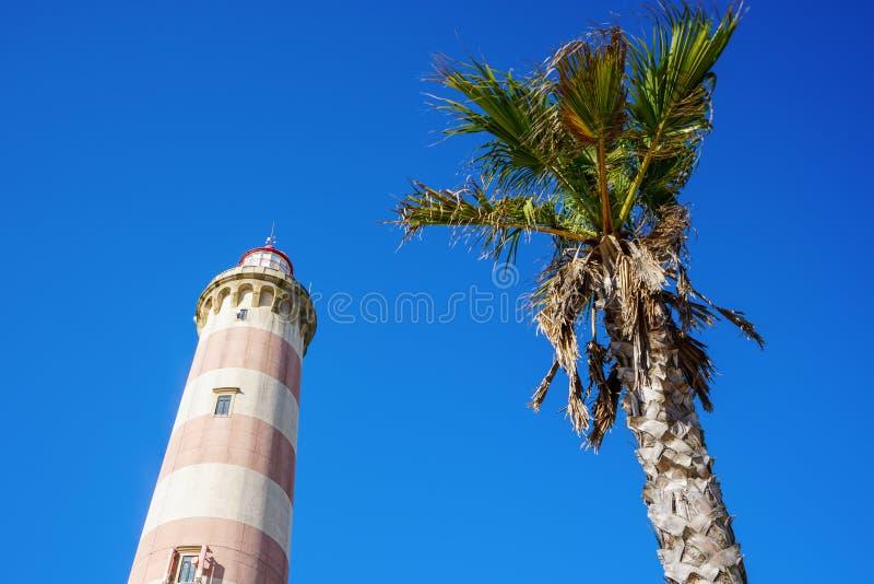 Laag-hoekfoto van de Vuurtoren van Praia DA Barra, naast een palm Duidelijke blauwe hemel in de loop van de dag stock foto's