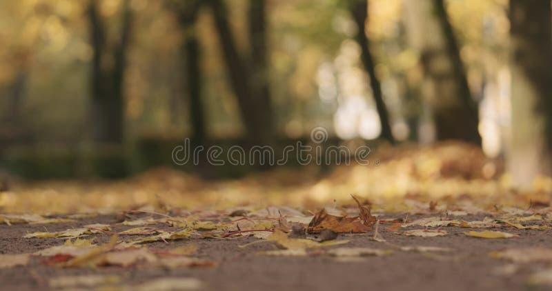 Laag hoekschot van gevallen de herfstbladeren op grond in stad stock afbeelding