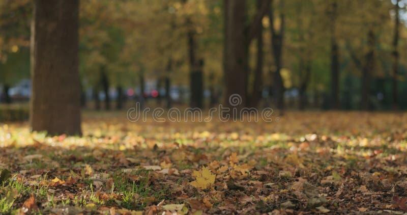 Laag hoekschot van gevallen de herfstbladeren op grond in stad royalty-vrije stock fotografie
