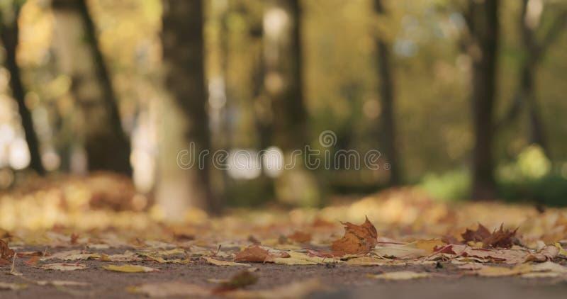 Laag hoekschot van gevallen de herfstbladeren op grond in stad stock afbeeldingen