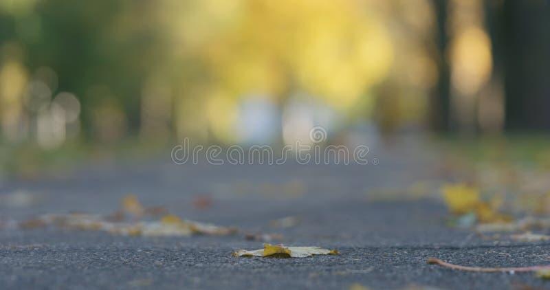 Laag hoekschot van gevallen de herfstbladeren op stoep in de ochtend met het bewegen van auto's op achtergrond stock fotografie
