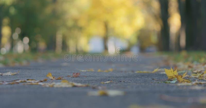 Laag hoekschot van gevallen de herfstbladeren op stoep in de ochtend met het bewegen van auto's op achtergrond royalty-vrije stock fotografie