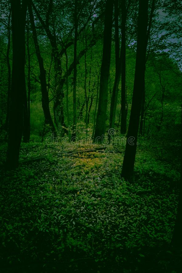 Laag licht humeurig die beeld in het hout wordt genomen Een kleine heldere vlek van licht maakt zijn manier aan sommige bladeren  royalty-vrije stock foto