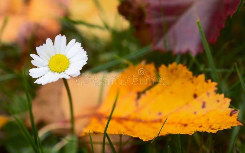 Laatste bloem van daling stock afbeeldingen