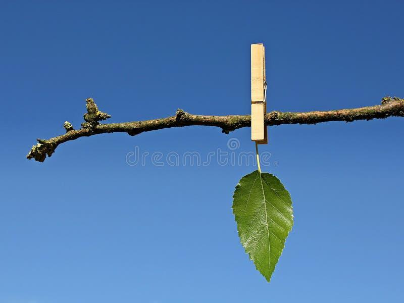 Laatste groen blad royalty-vrije stock foto's