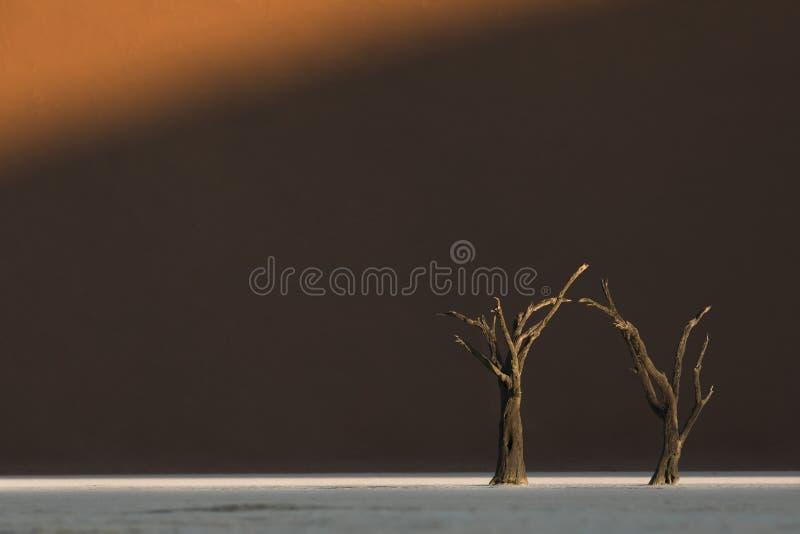Laatste licht op boom Deadvlei, Sossusvlei, Sesriem, Zuidelijk Namibi? Lage hoek met aardige duinen als achtergrond royalty-vrije illustratie