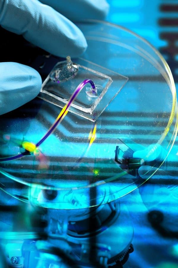Free Lab Royalty Free Stock Photo - 25341935