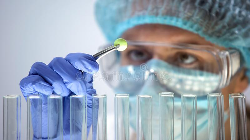 Lab assistant examining green organic pill, pharmaceuticals and homeopathy stock photography