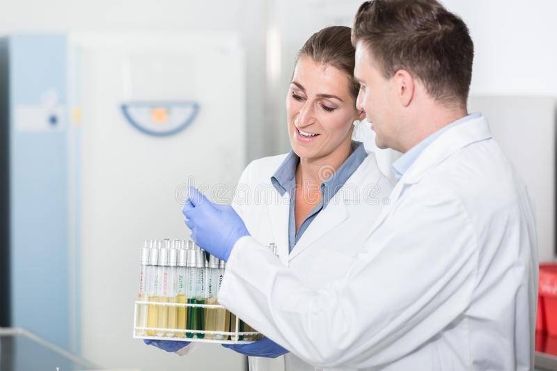 Lab assistants in research laboratory preparing samples for scie. Ntific test stock photography