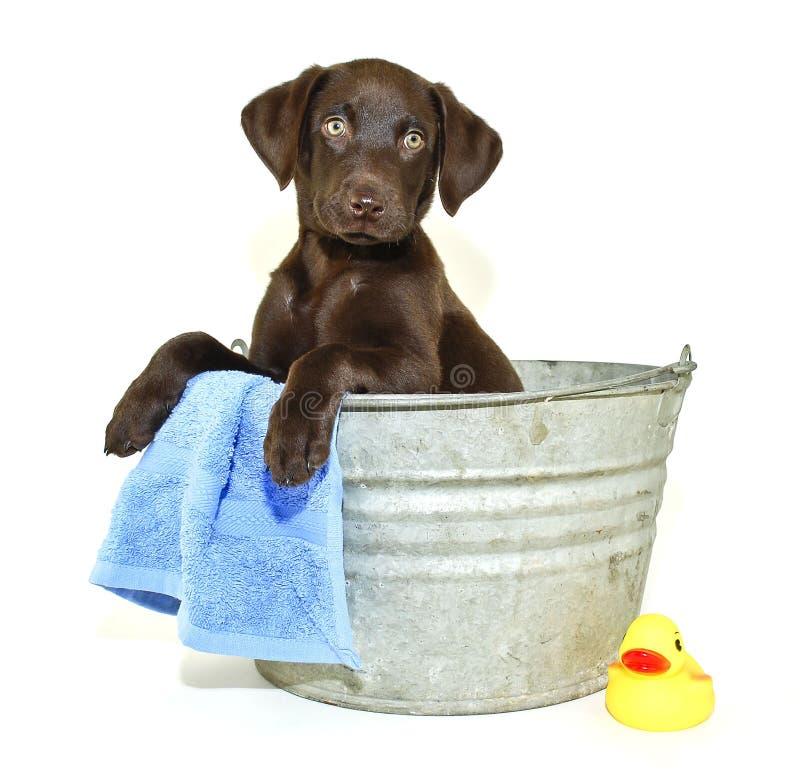 Free Lab Puppy Getting A Bath Stock Image - 22057771