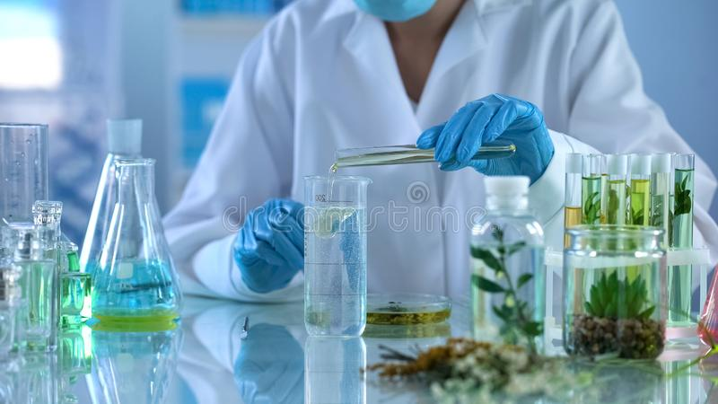 Lab technician pouring oil in test liquid, cosmetics production, aromatherapy royalty free stock photo