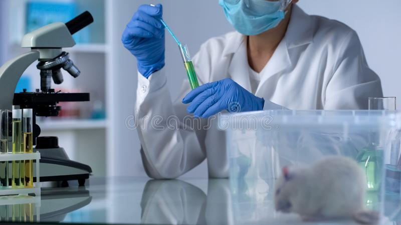 Lab technician pouring test liquid in tube, looking at reaction, lab rat in box stock photography