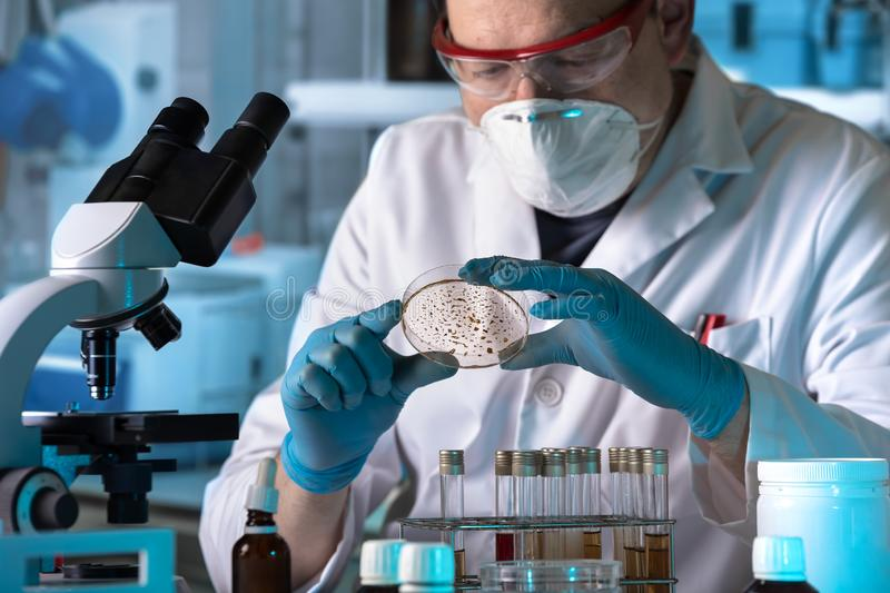Lab technician working with petri dish for analysis in the micro royalty free stock images