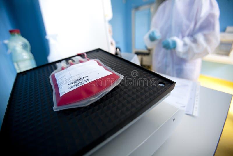 Lab technik przetwarza krwionośną torbę zdjęcie royalty free