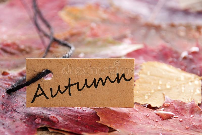 A label with autumn on it stock images