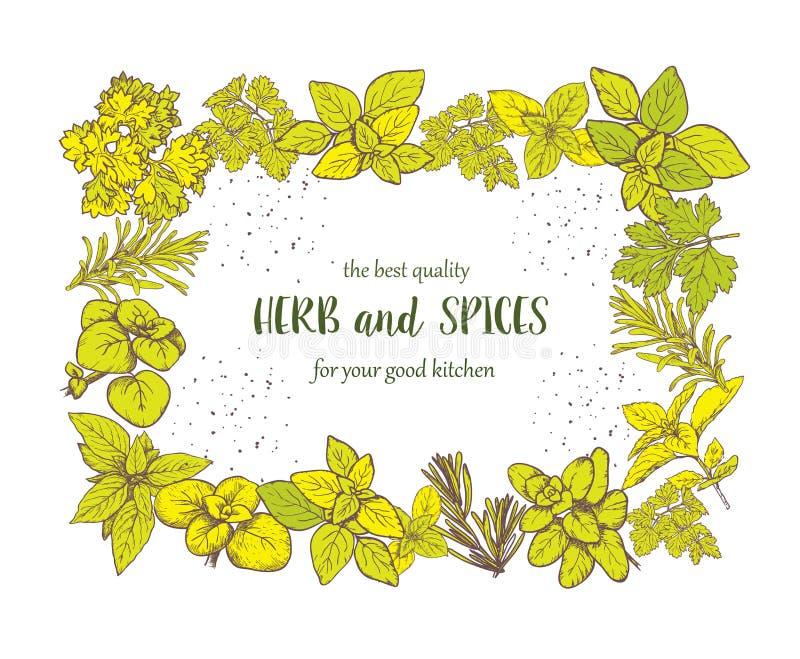 Label d'herbes et d'épices Illustrations de gravure pour l'empaquetage illustration de vecteur
