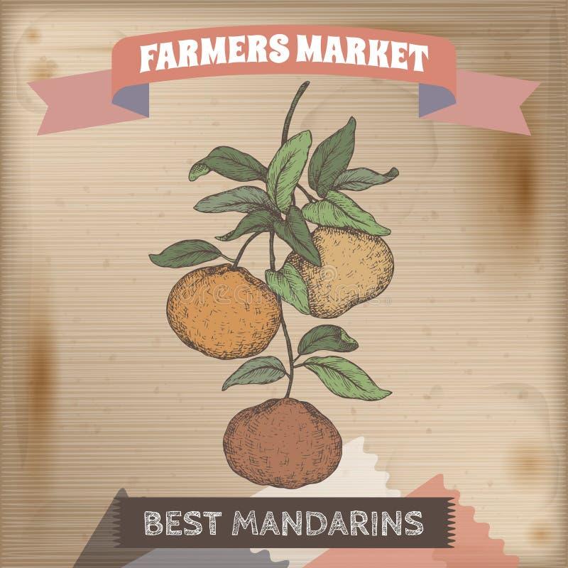 Label du marché de Famer avec le croquis de couleur de branche de mandarine sur le fond en bois illustration stock