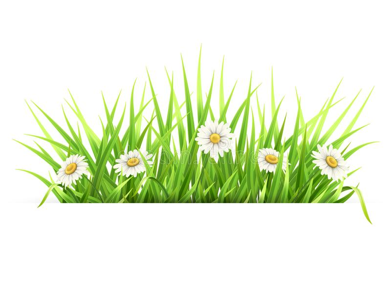 Label with green grass and daisies royalty free illustration