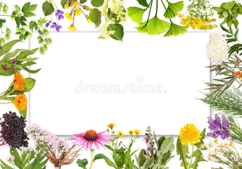 Label vide avec les plantes médicinales 2 photographie stock