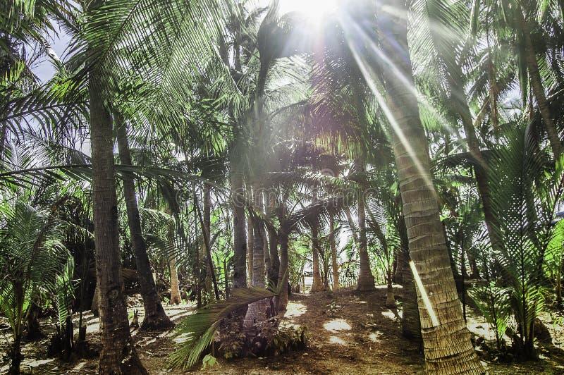 Laberinto de Palmtree imagenes de archivo
