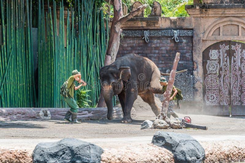 Bali Safari & Marine Park at the Elephant show. Labih, Bali / Indonesia - 11/19/2016 Bali Safari & Marine Park at the Elephant show stock photography