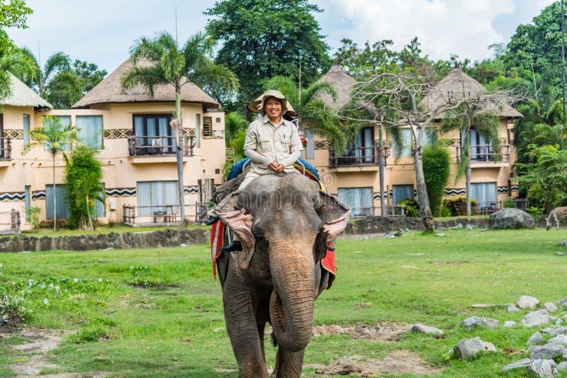 Man riding elephant at the Bali Safari & Marine Park. Labih, Bali / Indonesia - 11/19/2016 Man riding elephant at the Bali Safari & Marine Park royalty free stock image