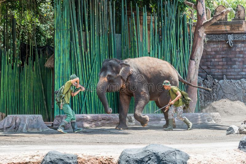 Bali Safari & Marine Park at the Elephant show. Labih, Bali / Indonesia - 11/19/2016 Bali Safari & Marine Park at the Elephant show stock images