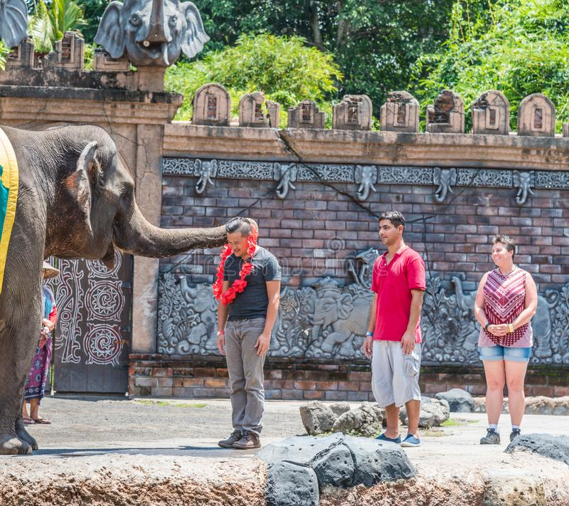 Bali Safari & Marine Park at the Elephant show. Labih, Bali / Indonesia - 11/19/2016 Bali Safari & Marine Park at the Elephant show stock photos