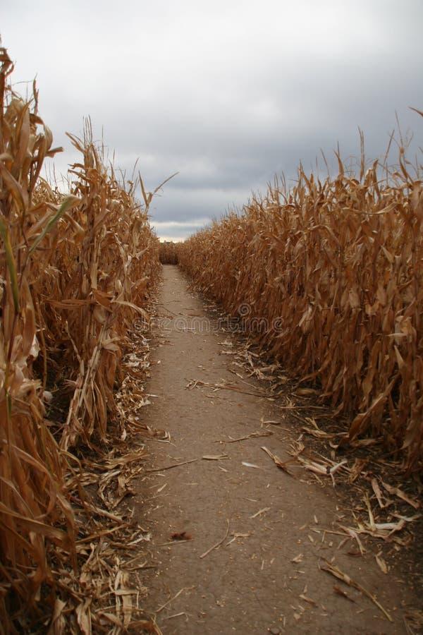 Labirinto del cereale fotografie stock libere da diritti