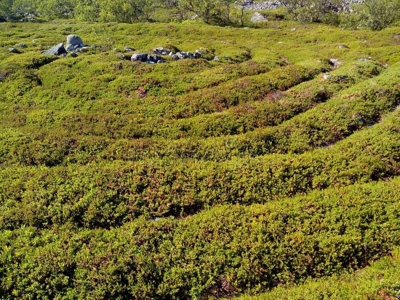 Labirinto di pietra dell'isola di Bolshoi Zayatsky Il mare bianco, isole di Solovetsky, Carelia, Russia fotografia stock libera da diritti