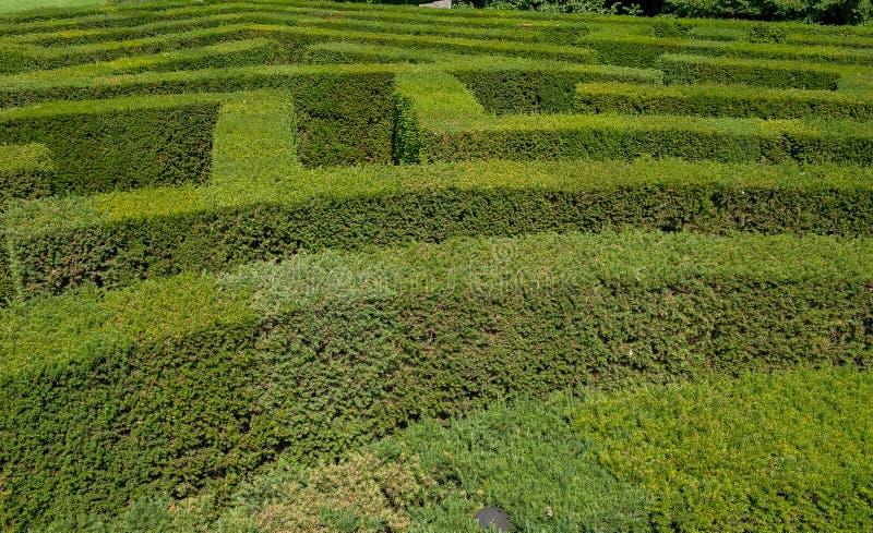 Labirinto do labirinto em um jardim botânico no parque seguro fotografia de stock royalty free